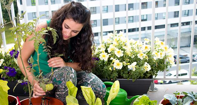 Growing Food in Small Gardens - Trendimi Online Course