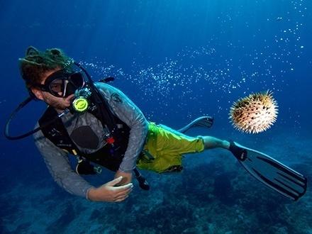 ¡Descubre las bellezas del mar! $55 por Discovery Scuba para 1 persona o $99 para 2 personas que incluye: 1 Buceo en mar abierto con equipo completo de buceo: tanque, BCD, regulador, profundímetro, presionómetro, careta, chapaletas, 'snorkel' y pesas + 20% de Descuento en la 2da buceada