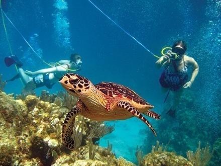 """¡Aventura en Culebra! $79 por Pasadía para 1 persona que incluye: Nueva modalidad de bucear """"SNUBA"""" + Snorkeling + Meriendas + Refrigerios + Almuerzo ligero"""