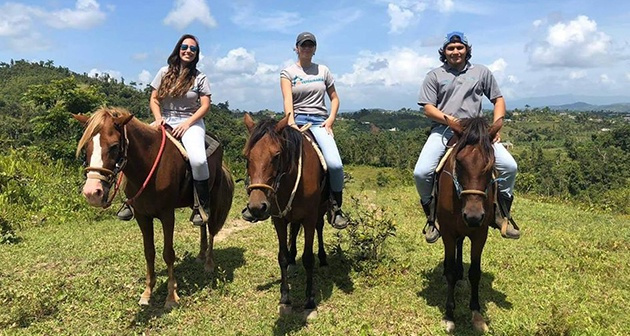 Horse and Ponys - Yabucoa